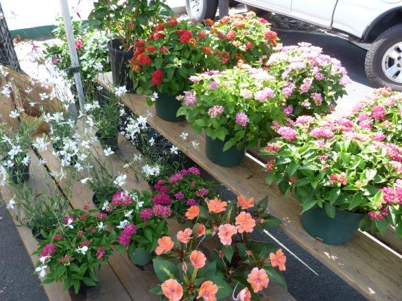 Duel Growers-flowering plants-P1210288